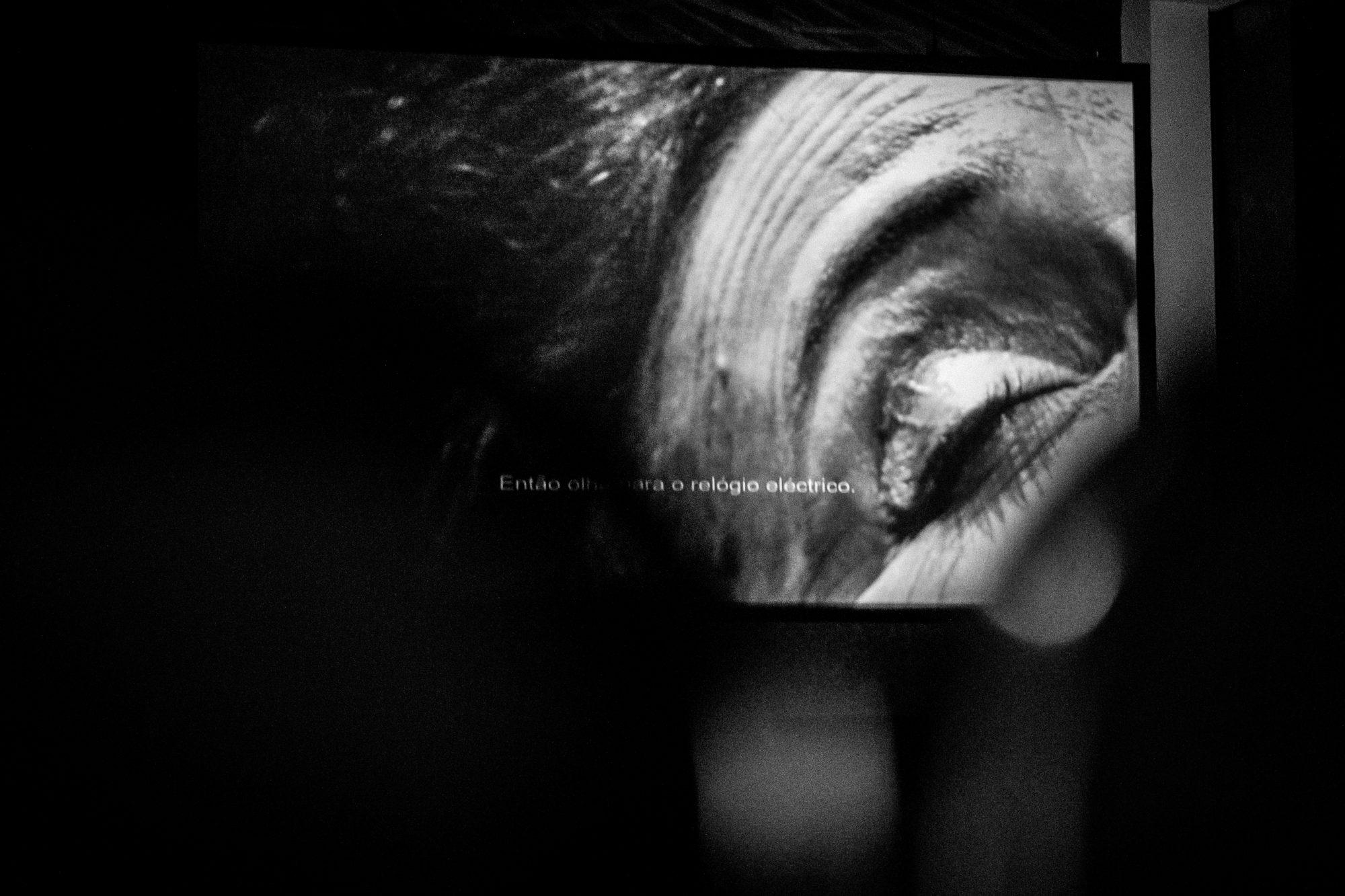 Fotografia de ensaio © Estelle Valente